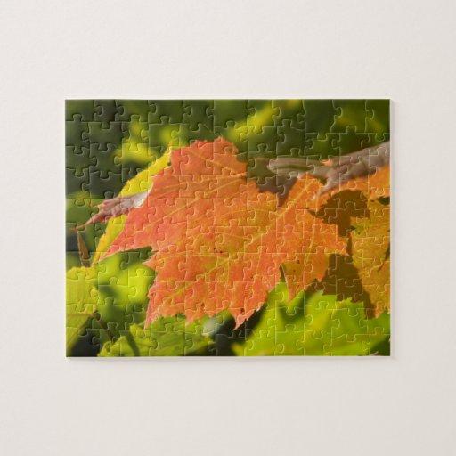 One Autumn Leaf Jigsaw Puzzle
