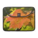 One Autumn Leaf MacBook Pro Sleeve