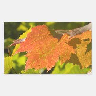 One Autumn Leaf Rectangular Sticker