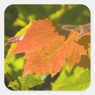 One Autumn Leaf Square Sticker