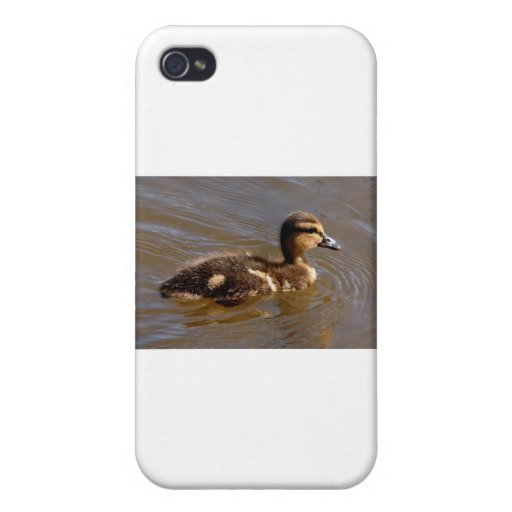 One Baby Mallard Covers For iPhone 4