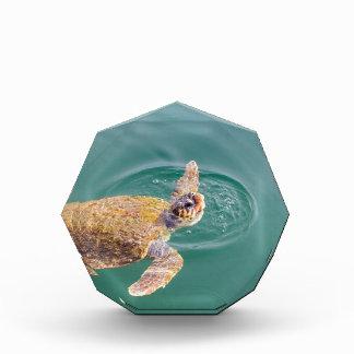 One big swimming sea turtle Caretta Award