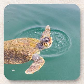 One big swimming sea turtle Caretta Beverage Coaster