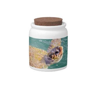 One big swimming sea turtle Caretta Candy Dishes