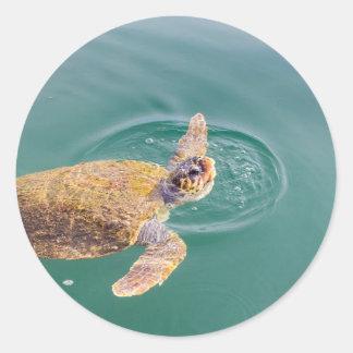 One big swimming sea turtle Caretta Classic Round Sticker
