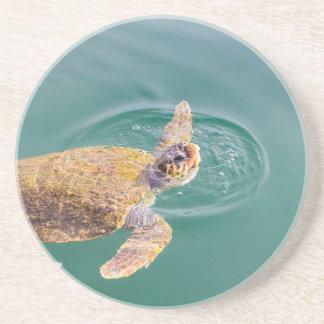 One big swimming sea turtle Caretta Coaster