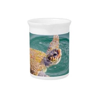 One big swimming sea turtle Caretta Pitcher