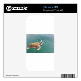 One big swimming sea turtle Caretta Skin For iPhone 4