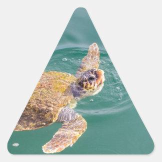 One big swimming sea turtle Caretta Triangle Sticker