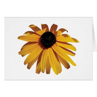 One Black-Eyed Susan Greeting Card