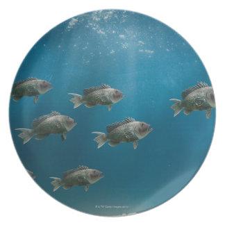 One black sea bass leading a school melamine plate