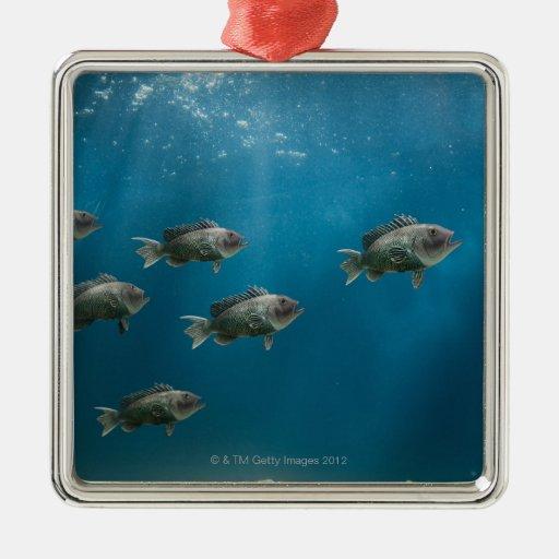 One black sea bass leading a school square metal christmas ornament