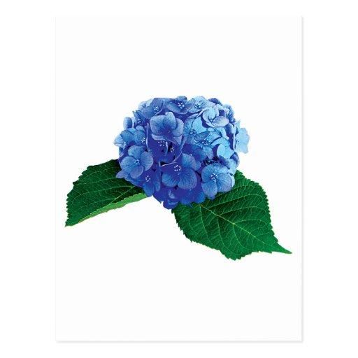One Blue Hydrangea Postcard