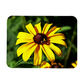 One Bright Yellow Black-Eyed Susan Flower with Bee Magnet
