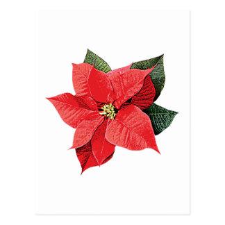 One Christmas Poinsettia Postcard