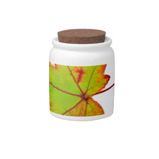 One colorful maple leaf in autumn on white candy jar