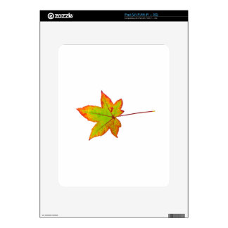 One colorful maple leaf in autumn on white decal for iPad
