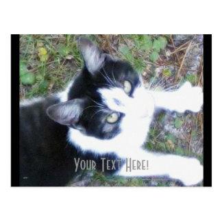 One Cool Cat (Boy) Postcard