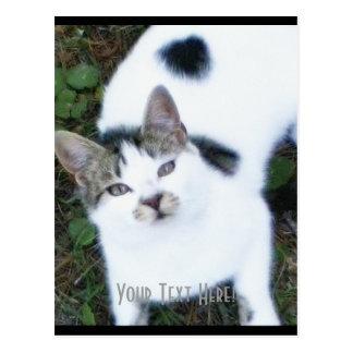 One Cool Cat (Girl) Postcard
