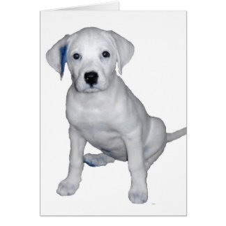 One Cool Pup Card