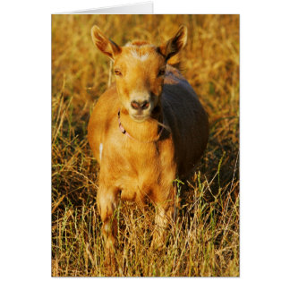 One Cute Goat Card
