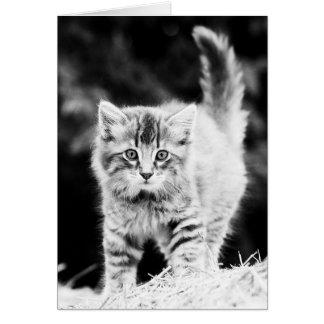 One Cute Kitty (black/white) Greeting Card