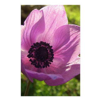 One Delicate Purple Anemone Coronaria Flower Stationery
