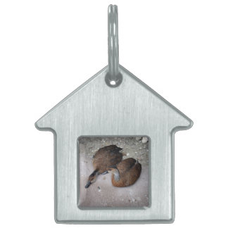 one duck lying one duck sitting pet tag