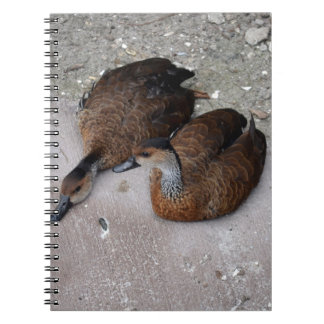 one duck lying one duck sitting spiral notebook