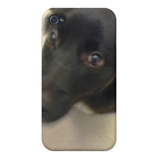 One Ear up! One Ear Down! Covers For iPhone 4