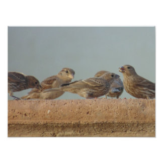 One finch is never enough photograph