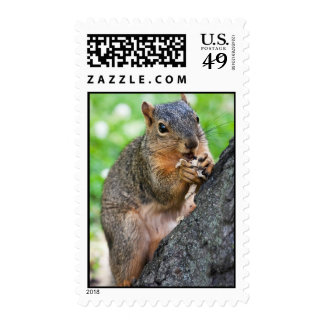 One Happy Squirrel Stamps