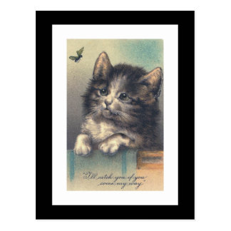 """""""One Kitten and a Fly"""" Vintage Postcard"""