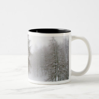 One leaning tree in a snow covered path Two-Tone coffee mug