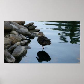 One Legged Duck Poster