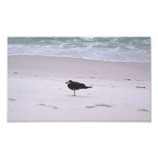 One Legged Seagull Poster