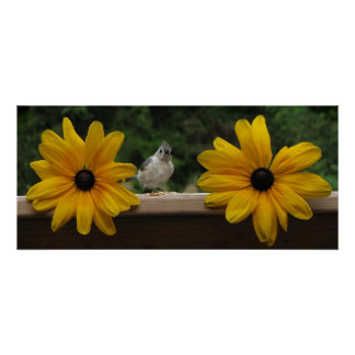 One-Legged Tufted Titmouse Poster