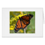 One Monarch Greeting Card
