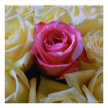 One of a Kind Love, Unique Beauty Pink Rose Yellow Poster