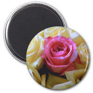 One of a Kind Love, Unique Beauty Pink Yellow Rose Magnet