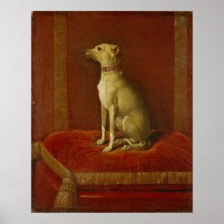 One of Frederick II's Italian greyhounds Poster