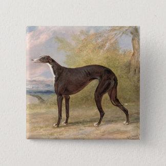 One of George Lane Fox's Winning Greyhounds: the B Pinback Button