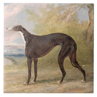 One of George Lane Fox's Winning Greyhounds: the B Tile