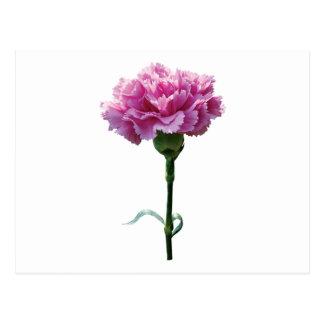 One Pink Carnation Postcard