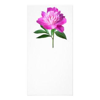 One Pink Peony Card