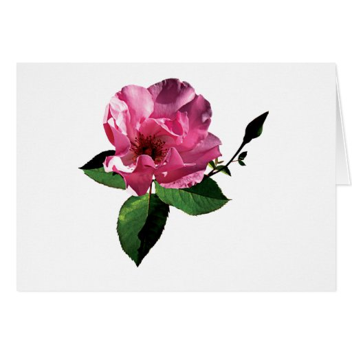 One Pink Rose with Bud Cards