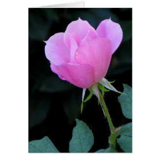One Pink Rosebud Greeting Card