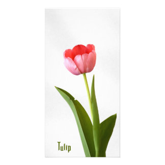 One Pink Spring Tulip Nature Floral Photo Card