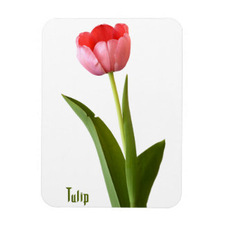 One Pink Spring Tulip Nature Floral Photo Magnet