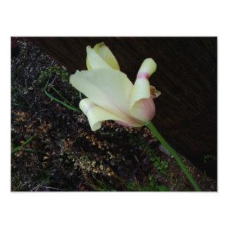 One Pretty Flower Photo